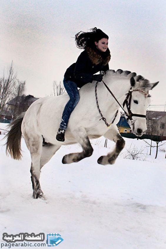 صور خلفيات بنات راكبات الخيل 2020 الصفحة العربية Horses Horse Love Horse Breeds