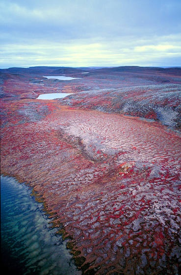 Tundra, Central Barrenlands, Nunavut, Canada.[Geography Awareness Week 11/2013]