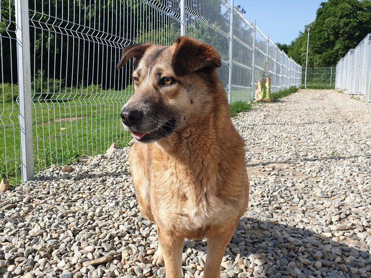 Nena Aus Festenbach Gmund Sucht Ein Neues Zuhause Hunde Neues Zuhause Tierfreund
