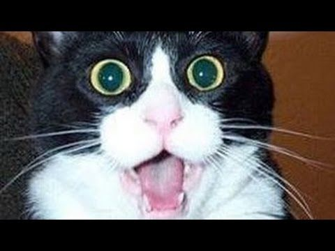 Funny Cat Compilation 2015 | [Most See]