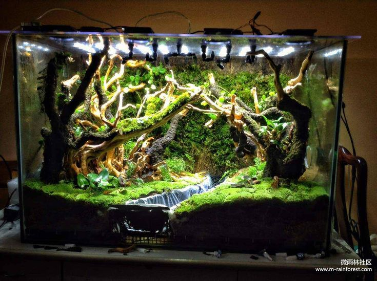 Terrarium simulating a small brook through a forest. By mrainforest, seen on Facebook. https://www.facebook.com/mrainforest/photos/a.466666276868096.1073741831.463989387135785/466666756868048/?type=3&theater