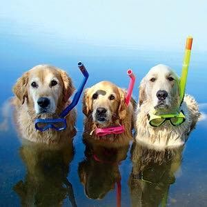 Do we do the doggy paddle?