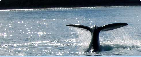 Puerto Madryn - Ballenas en Puerto Madryn