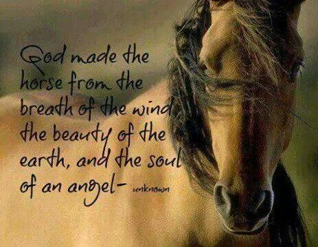God made the horse