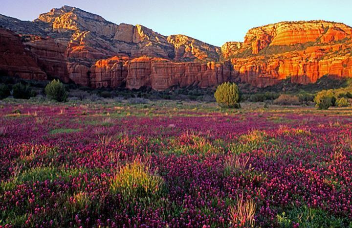 56 Best Arizona Images On Pinterest Arizona Usa Beautiful Places And Paisajes