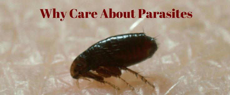 Why Care About Parasites | Pet Quest