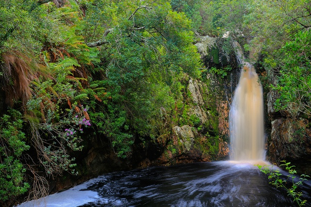 Drinking the fresh water at Disakloof Waterfall near Betty's Bay in South Africa. Photo - Celtics24