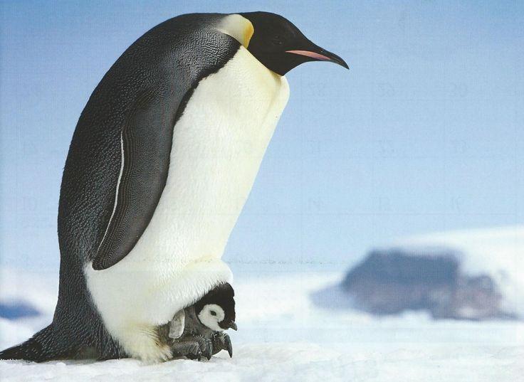 Penguin & Baby