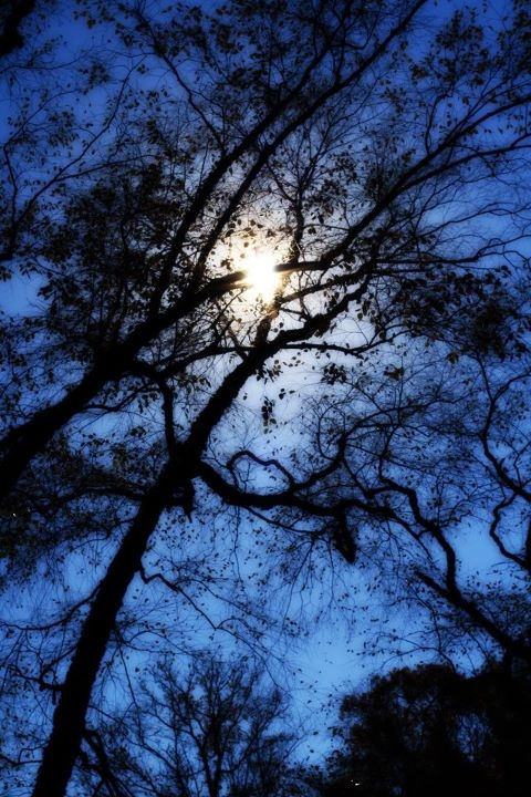Gilded Lily Photography 2011.  The Witching Hour.  Mysterious.  Cobalt.  Branches.  Moon.  Ethereal.