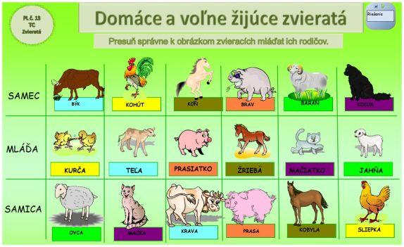 zvierata 3