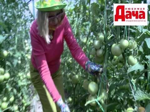 Выращиваем роскошные помидоры - YouTube