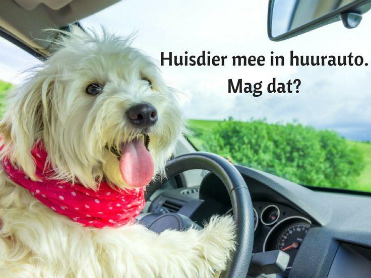 Je huisdier meenemen in een huurauto. Mag dat? Lees meer op het blog van Sunny Cars.
