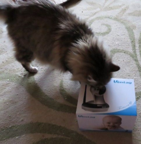 charlie cat checking out vimtag box