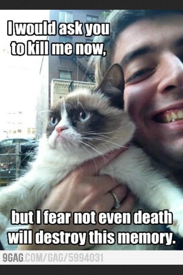 Méchant chat !!
