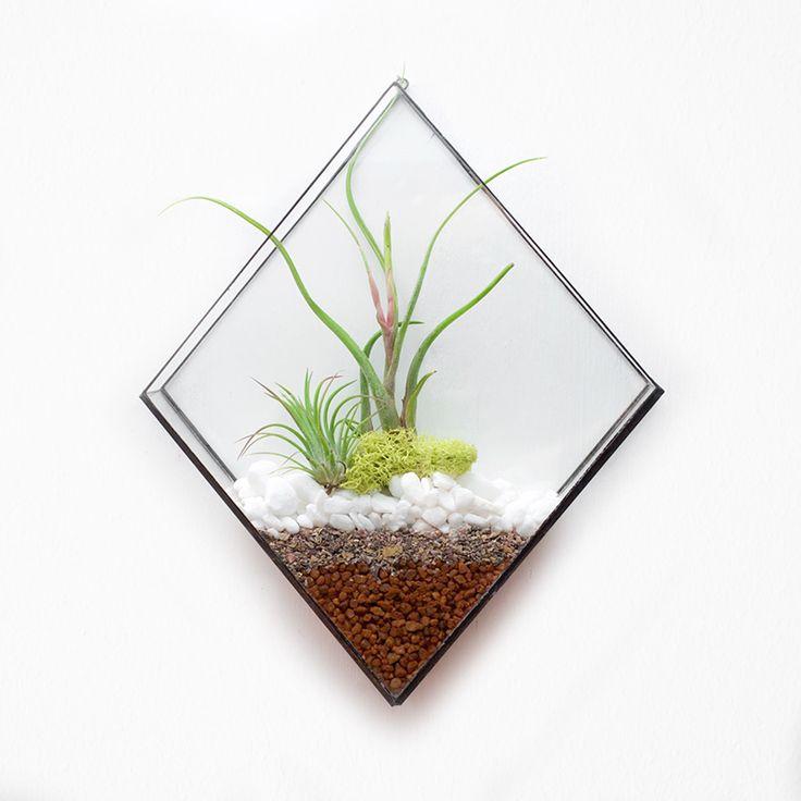 Diamond wall terrarium. Plant not included.
