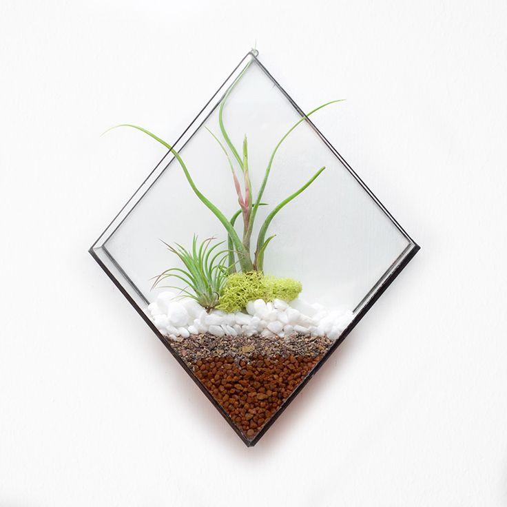 Diamond wall terrarium. Plant not included.