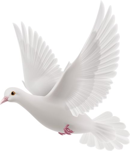 257 Best Dove Love Images On Pinterest Birds Peace And