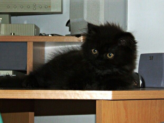She is 3 months old (2008.)