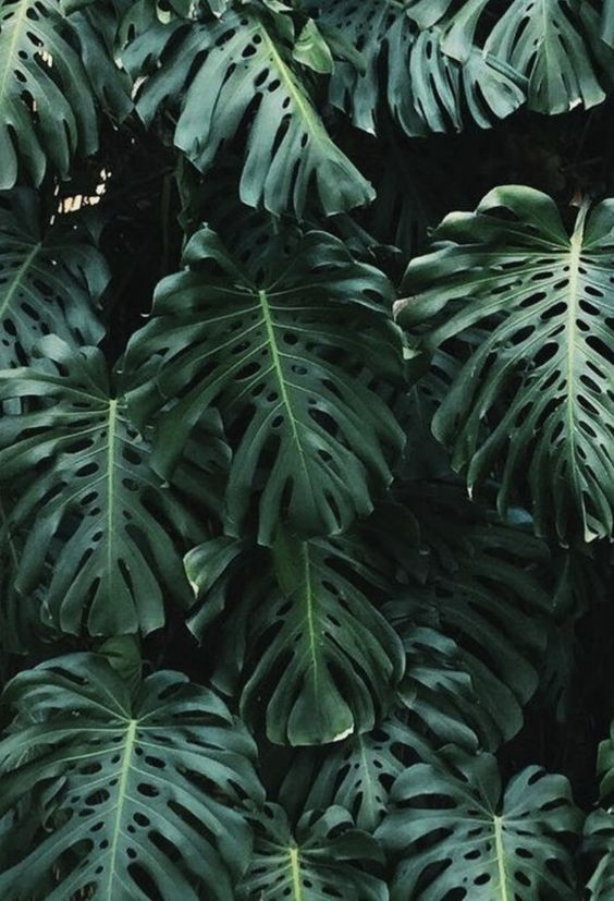 Aesthetic Quotes Wallpaper Tropical Palm Leaves Plantspo Plants Tropical