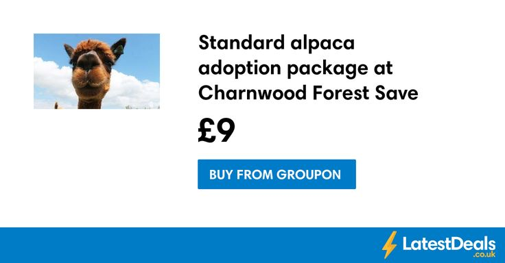 Standard alpaca adoption package at Charnwood Forest Save £11, £9 at Groupon