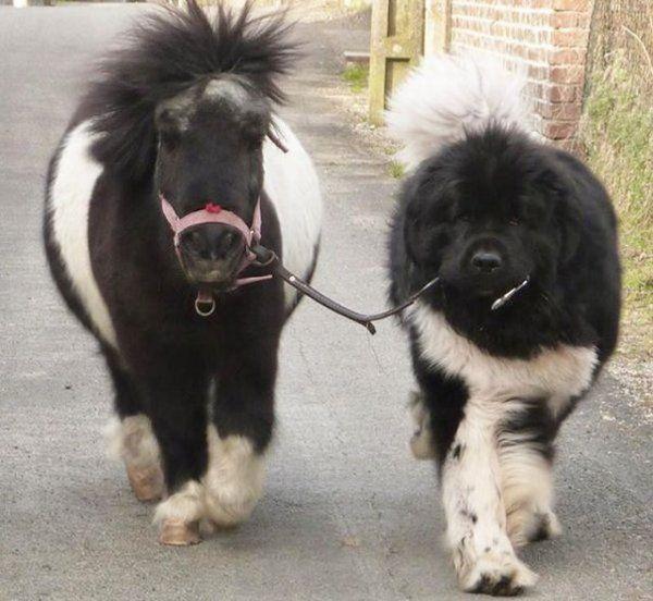 Mit dem Pony Gassi gehen | Webfail - Fail Bilder und Fail Videos