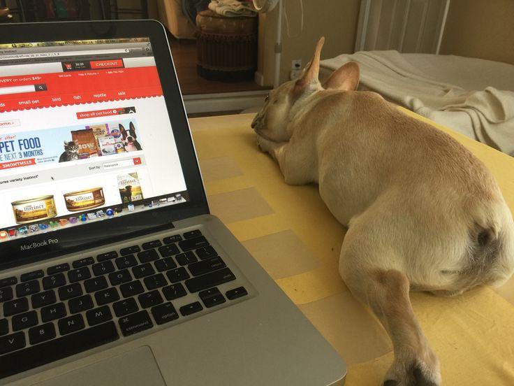 Brando Sleeping On My Desk While I Cruise The Internet Marlin Frenchie Pinterest