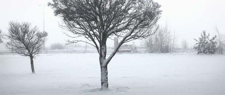 Talvi puu