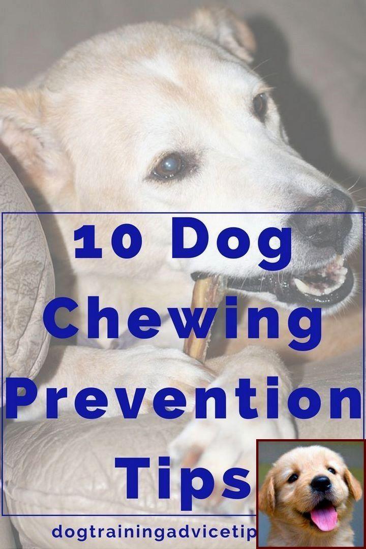 1 Have Dog Behavior Problems Learn About Dog Behavior Right After