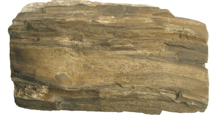Como fazer madeira petrificada. Tipicamente, a madeira petrificada leva milhões de anos para ocorrer naturalmente, já que os minerais se infiltram na madeira e substituem as células da mesma. O produto final é um bloco mineral muito forte na forma de madeira que mantém a durabilidade e resistência da pedra ao fogo. É possível simular esse processo a uma taxa mais rápida com uma ...