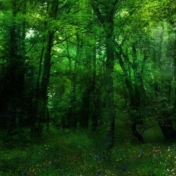 Музыкальные открытки, картинка с лесом для фотошопа