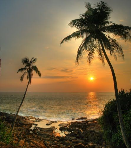 Island Beach Scenes: 46 Best Images About Palm Trees And Beach Scenes On