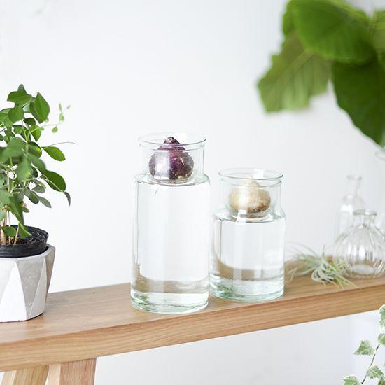 こんにちは、バイヤーの加藤です!本日より、ガラスの球根ベースの販売がスタートです!この時季になるとそろそろかしら?とお花屋さんをのぞく季節になりました。そう、この愛らしい球根たちを探していたのです〜。