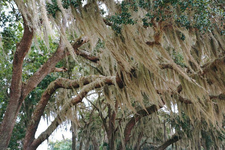 FloridaMama: День 4. Национальный лес Окала и крепость Святого Марка (Castillo de San Marcos) в Сент-Огастине