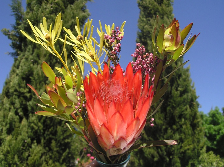Temenos King Protea The Secret Garden in McGregor