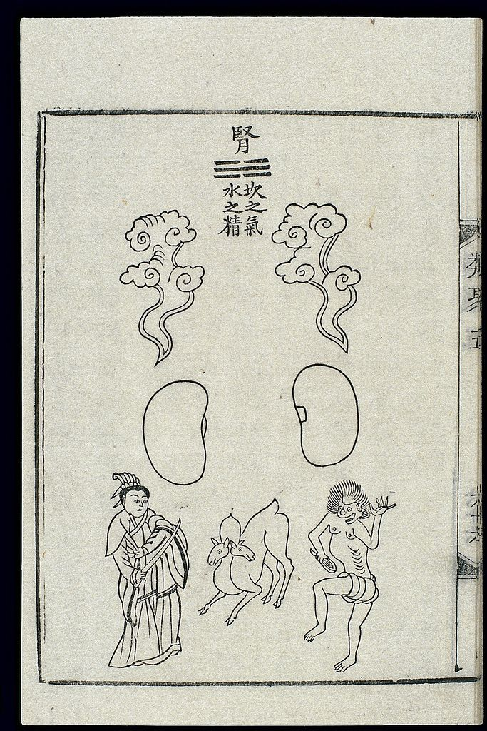 The text says: Kidney: Qi of kan(Water), essence of Water. Its colour is black. It looks like a suspended stone. Its spirit has the form of a white deer. On both sides it engenders zhi knowledge, which is transformed into a Jade Child. It is 1chitall (1chi[Chinese foot] = c. 1/3 m). It goes in and out of the treasure-house of the kidney.