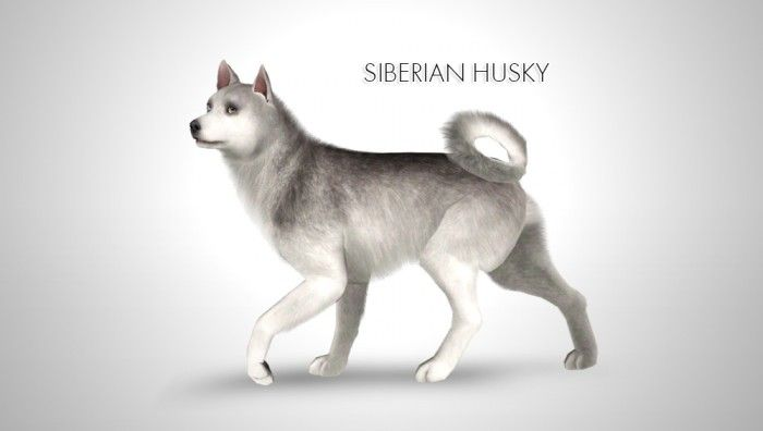 Improved Siberian Husky by Morganabanana - Sims 3 Downloads CC Caboodle