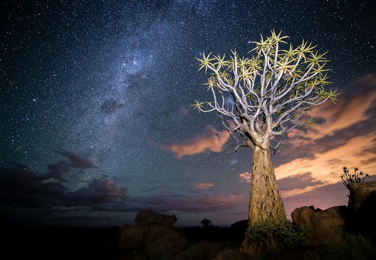 Keetmanshoop, Namibia, at the Kokerboom forest
