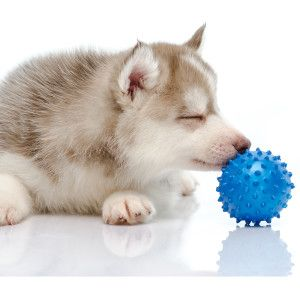 5 common choking hazards for dogs #Pets #PetLife #SouthAfrica