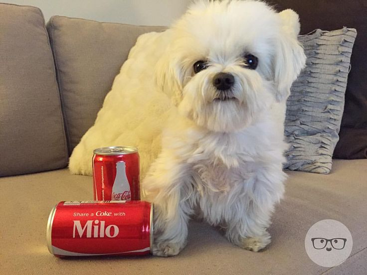 Too Cute Share A Coke With Milo Meets World Boo World S