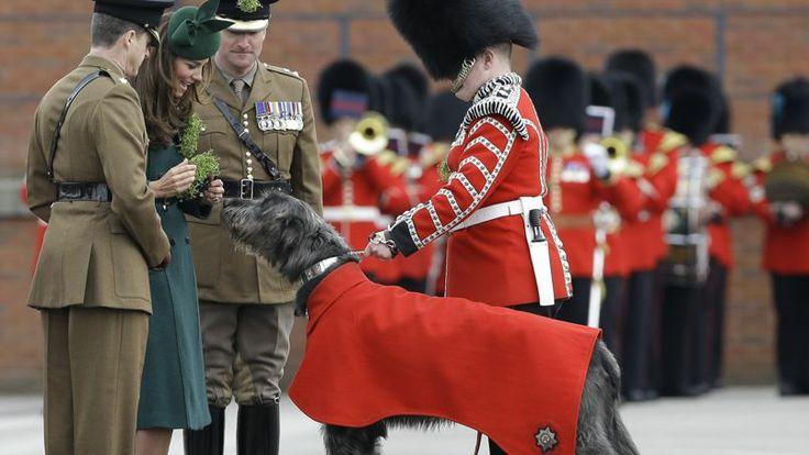 Le premier chien régimentaire s'appelait Brian Boru, du nom du glorieux roi irlandais, donné à l'armée par le club canin du Irish Wolfhound ...