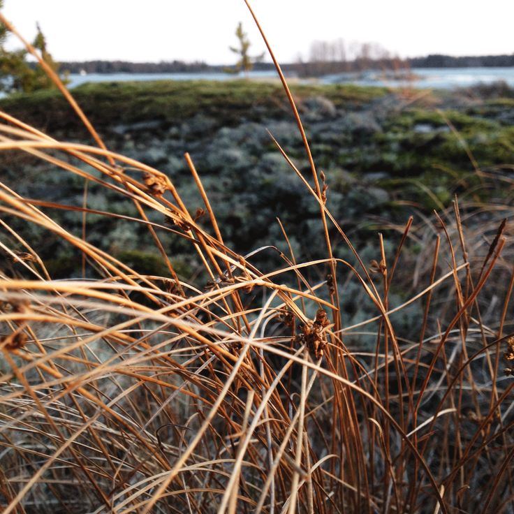 Grass on the Rocks. Rauma archipelago
