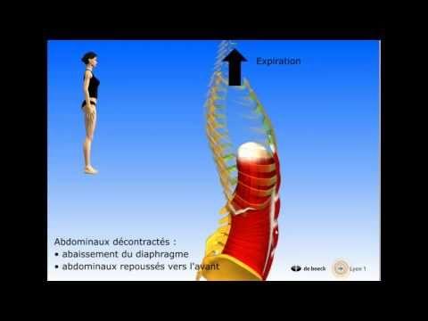 Vidéo sonorisée Les muscles postérieurs du tronc - YouTube