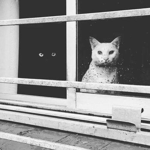 cat, black, and white -kuva