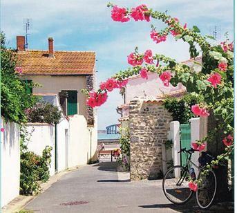 Île de Ré (Département Charente-Maritime, Région Poitou-Charentes, FRANCE)
