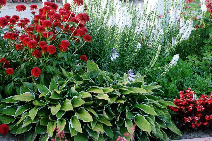 Ogród Hortulus Spectabilis  Hortulus Spectabilis Garden
