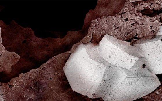 Cheesecake.  Caren Alpert heeft drie passies: fotografie, eten en kunst. De Amerikaanse fotograaf weet het goed te combineren in haar microfotografie, waarin ze voedsel fotografeert met een elektronen microscoop. In 'Terra Cibus' zien we oreo's, garnalen en chocolade van heel dichtbij.