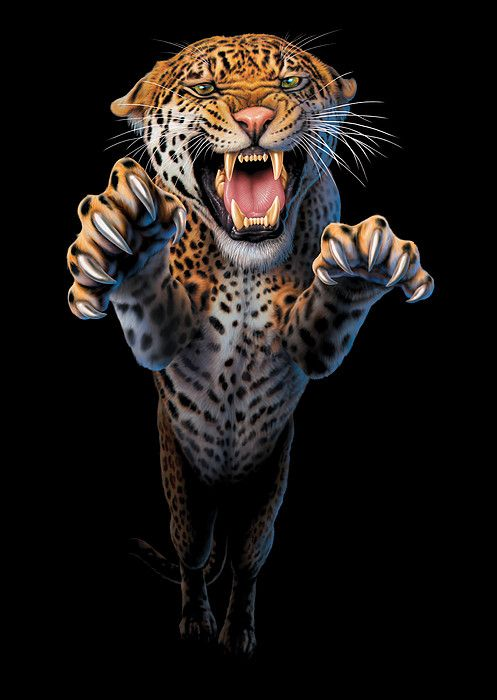 Leaping Leopard by MGL Meiklejohn Graphics Licensing