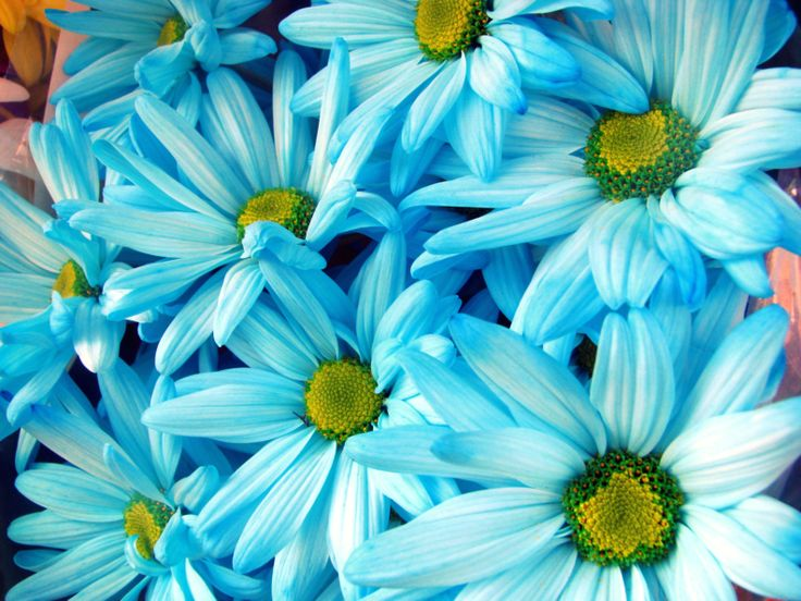 best daisies, cone,chamomille,gerbera images on, Beautiful flower