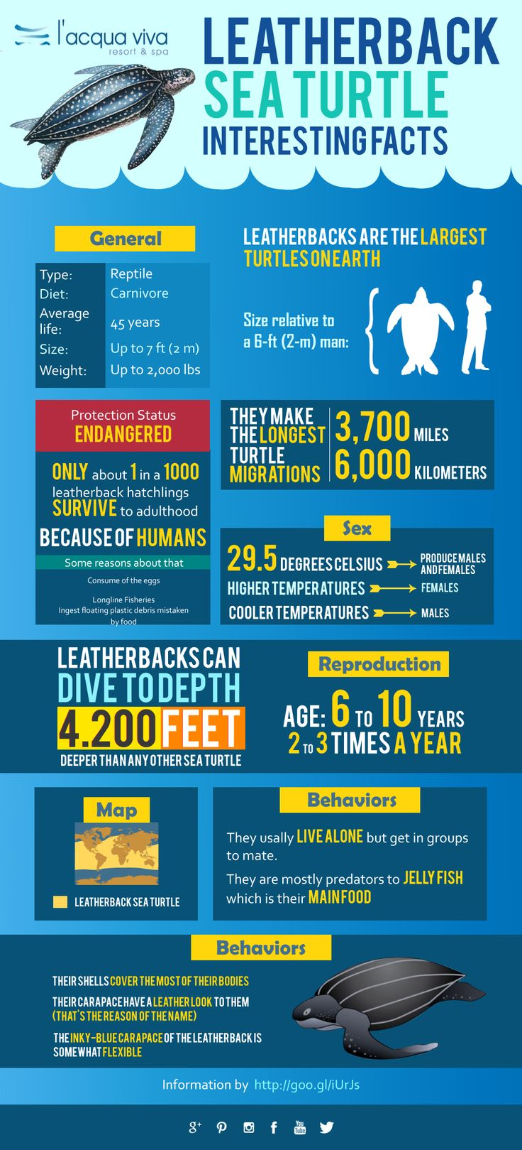 Interesting Facts about Leatherback Sea Turtle in our new ‪#‎infographic‬