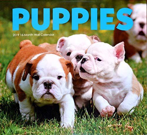 Puppies 2019 16 Month Wall Calendar Bulldog Puppies English